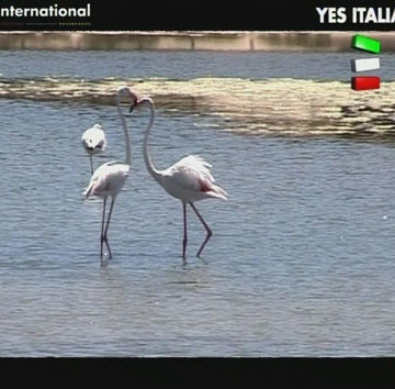 Cover Yes Italia Sardegna Sud-Ovest mp4 [h264] [360x360]